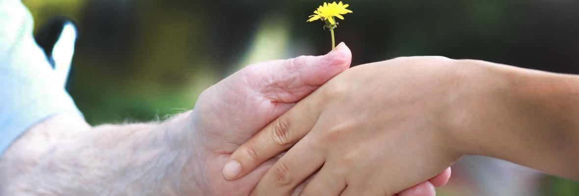 "An older person's hand grasps a dandelion, alongside a younger person's hand. With the text: ""This whole experience has been so easy. I will actively encourage others to use it."" A user of the Carer's Passport."