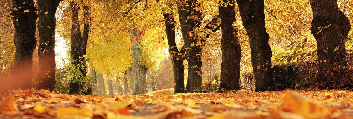 An autumnal scene