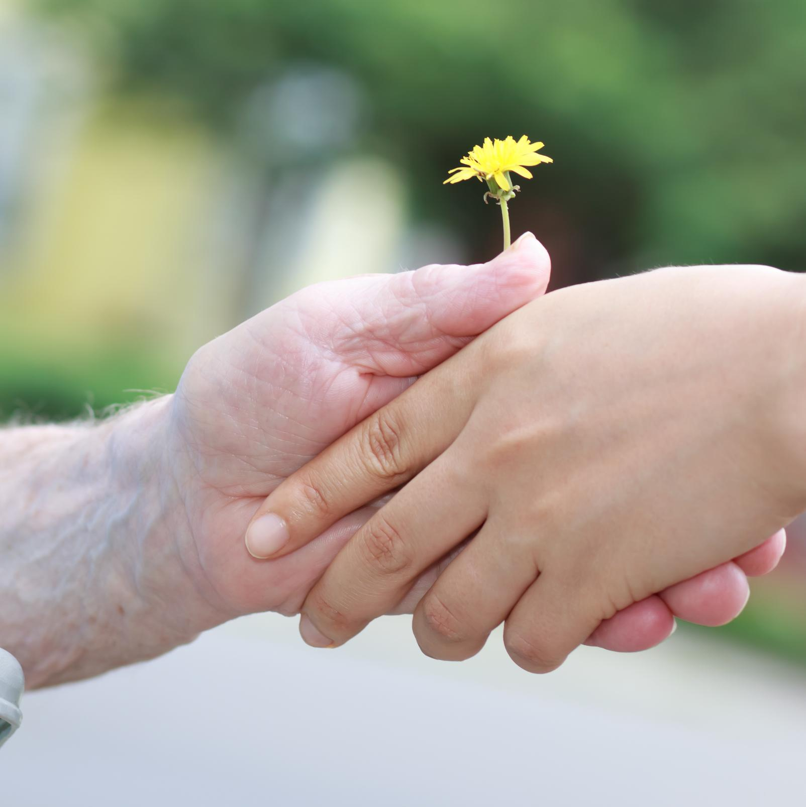 An older person's hand grasps a dandelion, alongside a younger person's hand.